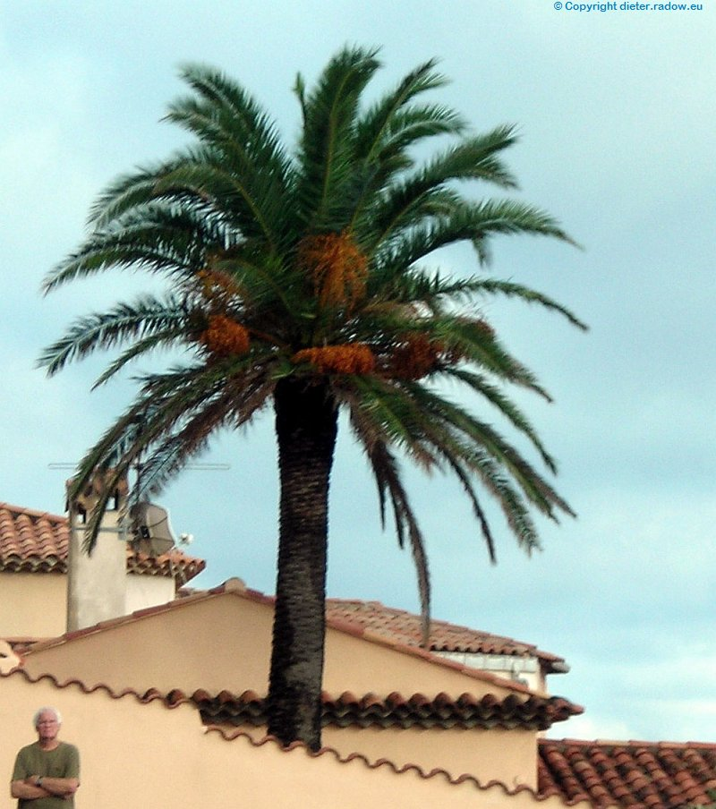 Frankreich St.Tropez Hausgarten-Palme
