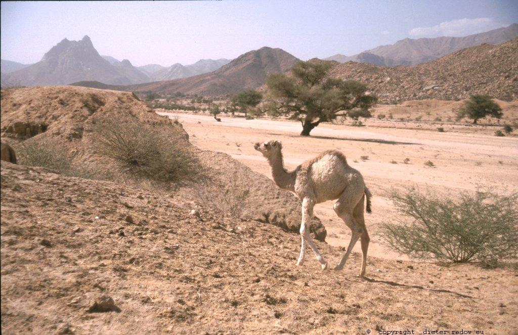246 Wadi im nördliochen Hochland