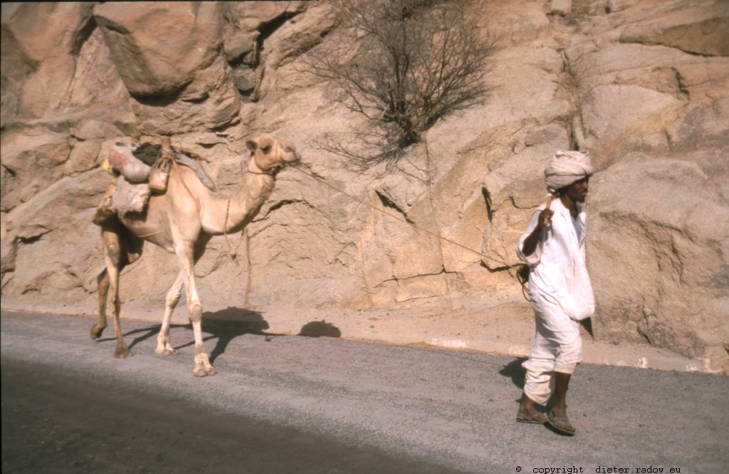 Eritrea 1997 ° ° ° camel transport near the border to Sudan ° ° ° Karmel-Transport