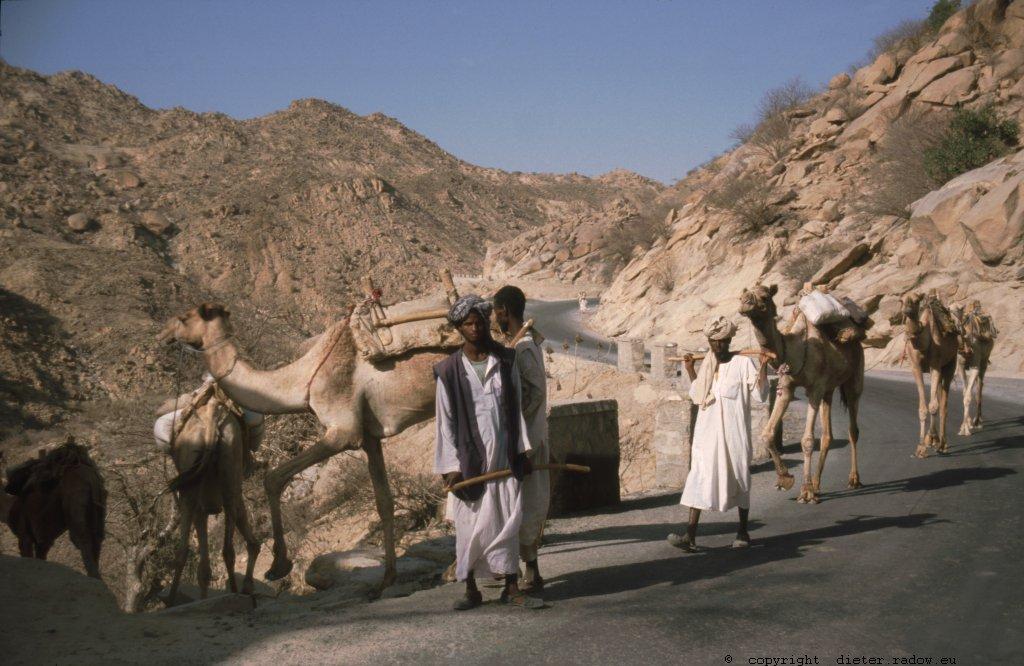 382 Kameltransport im Grenzland zum Sudan