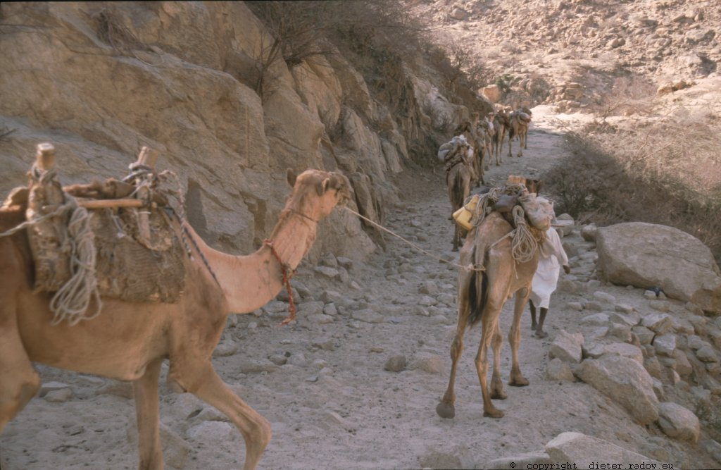 Eritrea 1997 ° ° ° camel caravan in the northern highland near the border to Sudan° ° ° Kamelkarawane im nördlichen Hochland nahe der Grenze zum Sudan