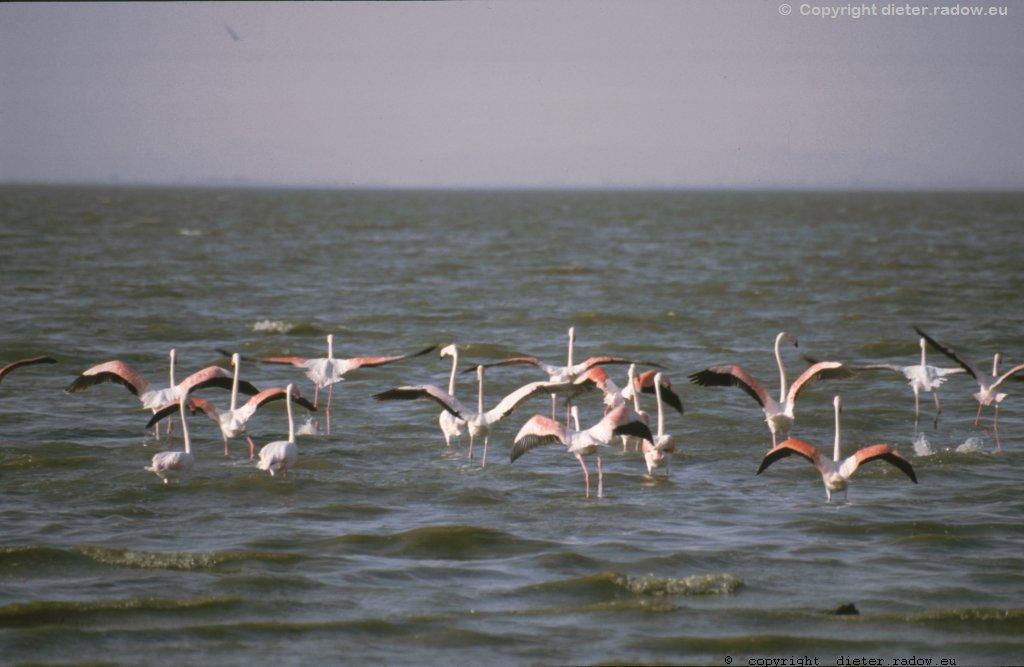 AES 345 Flamingos im Abflug