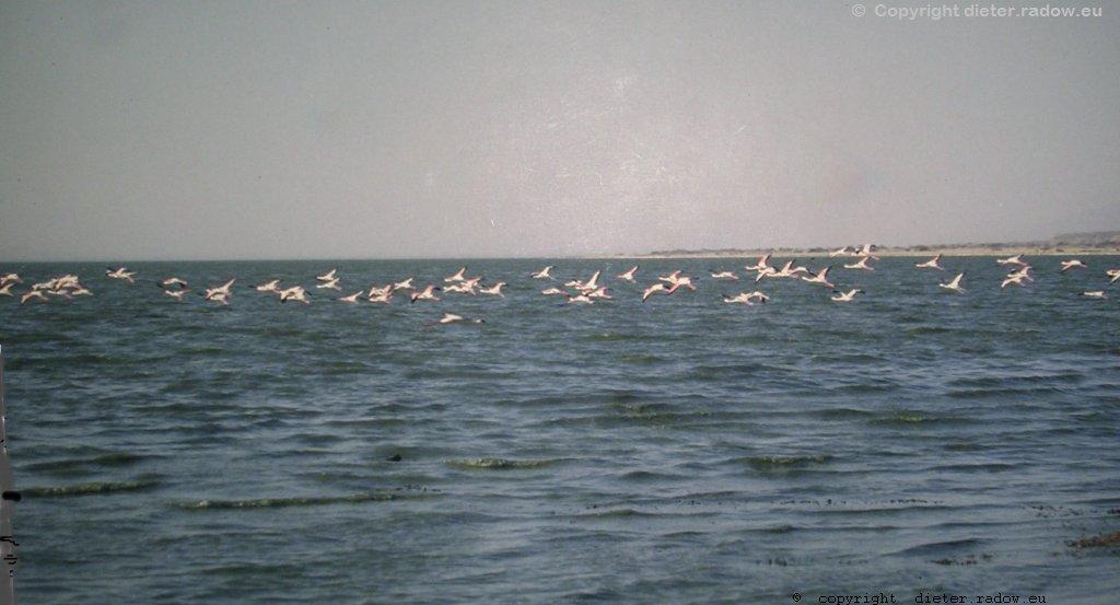Große Flamingos über dem Abiyata-See (Region Arsi)
