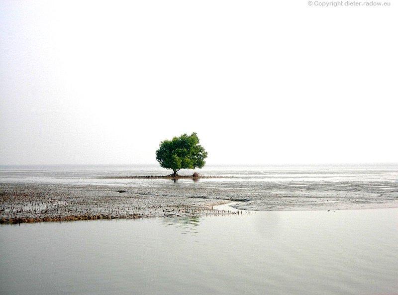 Bangladesch Das Ganges-Delta Sundarban endet am Golf von Bengalen 3