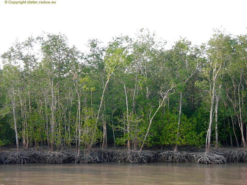 Bangladesch Ganges-Delta Sundarban  Mangroven im Delta 4