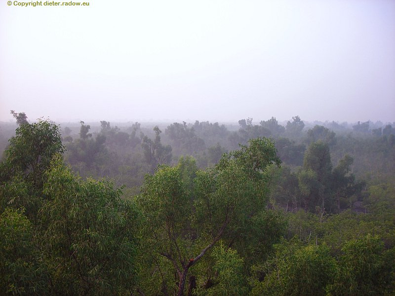 Bangladesch Mangroven-Dickicht 6