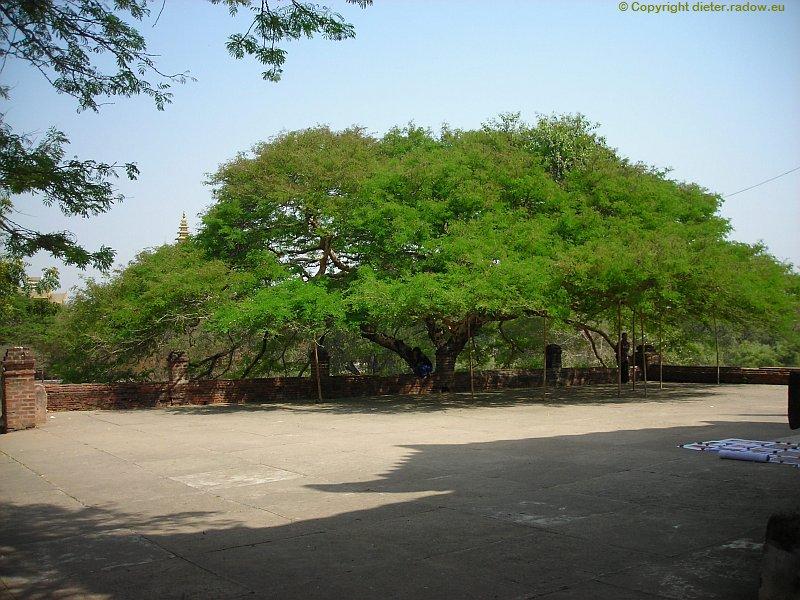 Birma DSCN0614a