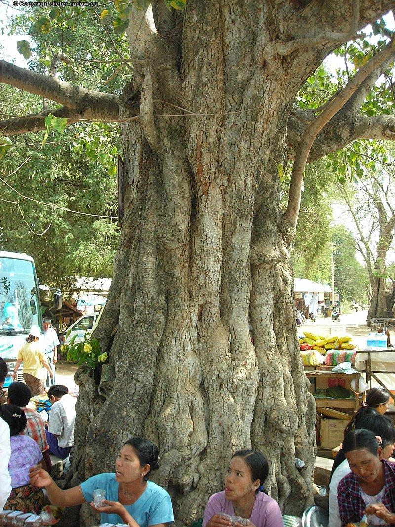 Birma DSCN0624
