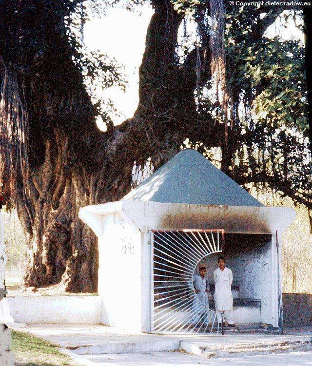 Sri Lanka heiliger Baum