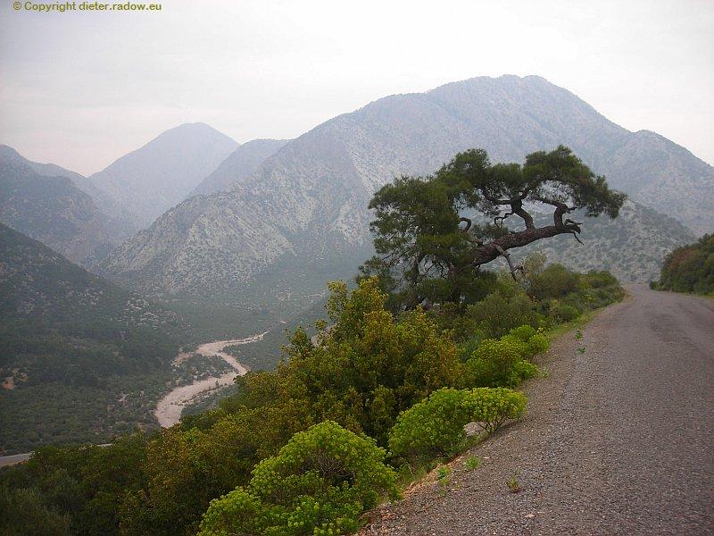 Türkei Kiefer im lykischen Gebirge