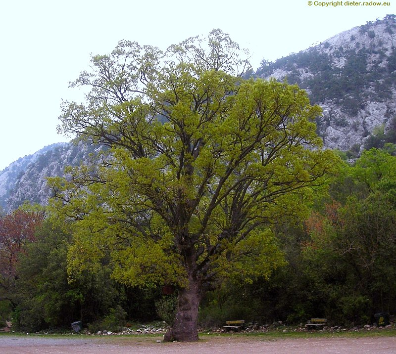 Türkei Termessos a