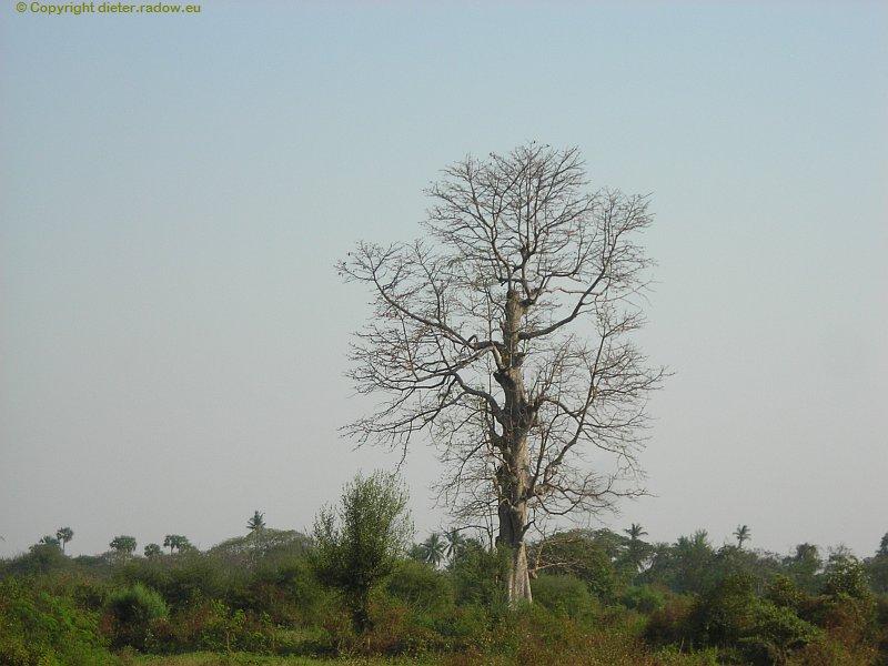 birma-227