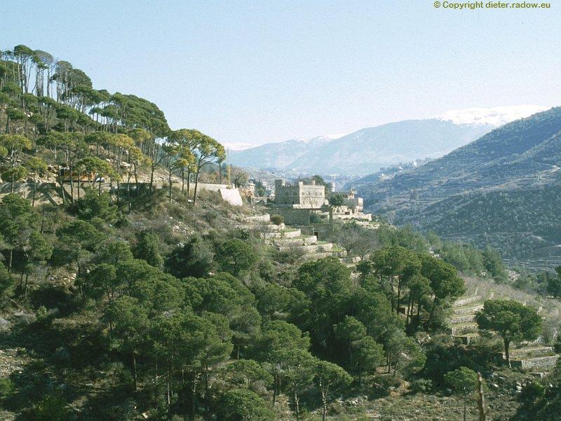 libanon-pinien-3