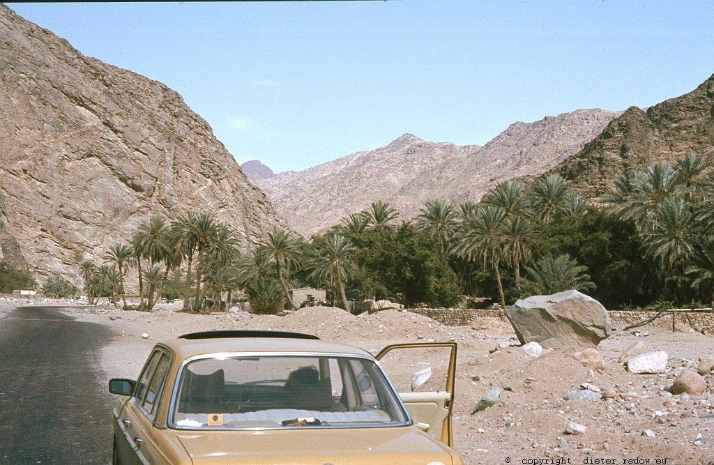Ägypten Sina Oase Feran 88