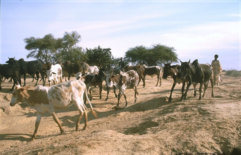 113 Burkina Faso Gorom Gorom Der Reichtum des Sahel 13