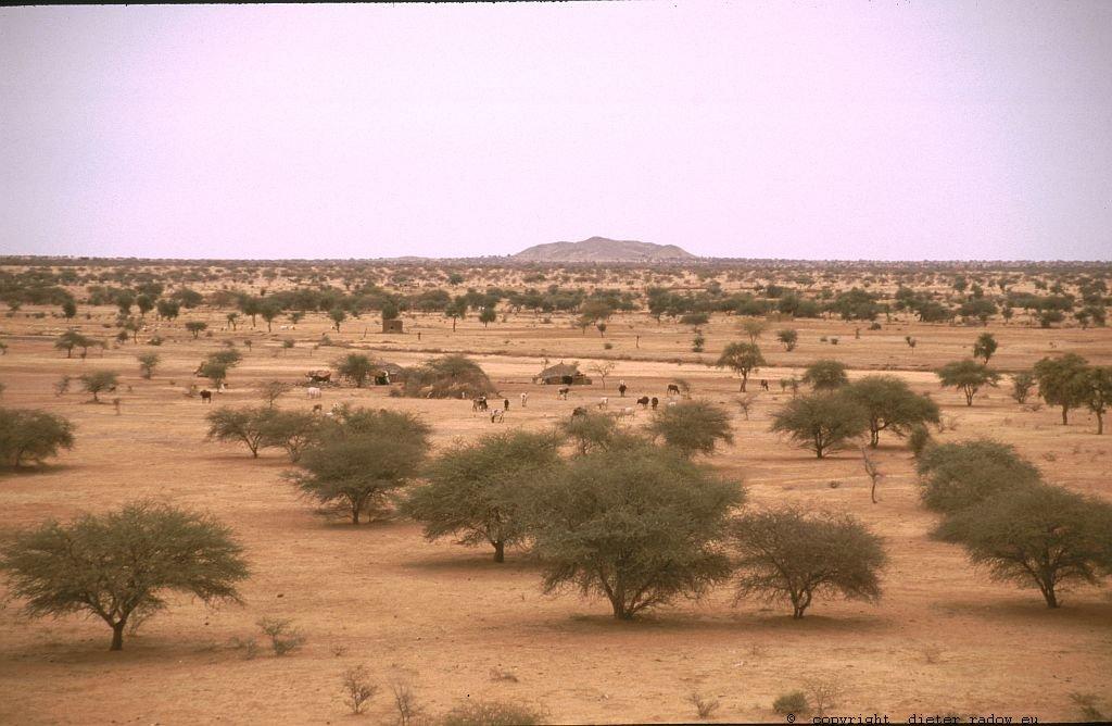 134 Burkina Faso Gorom Gorom Sahel mit Dornbuschgewächsen