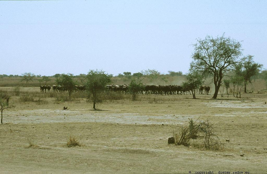 141 Burkina Faso Gorom Gorom10