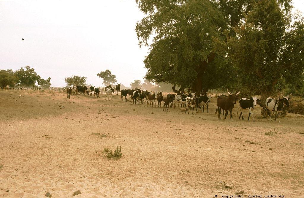 142 Burkina Faso Gorom Gorom11