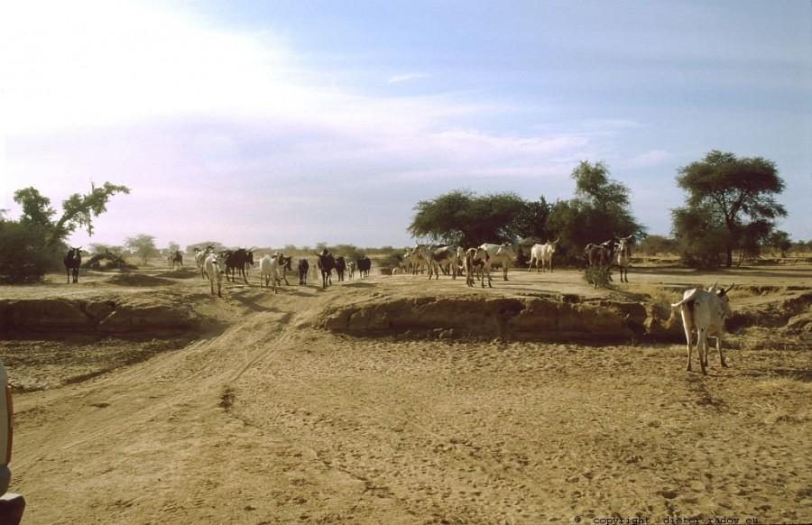 144 Burkina Faso Gorom Gorom9b