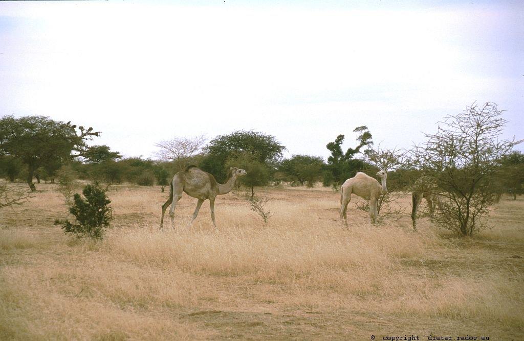 173 Burkina Faso Gorom Gorom76