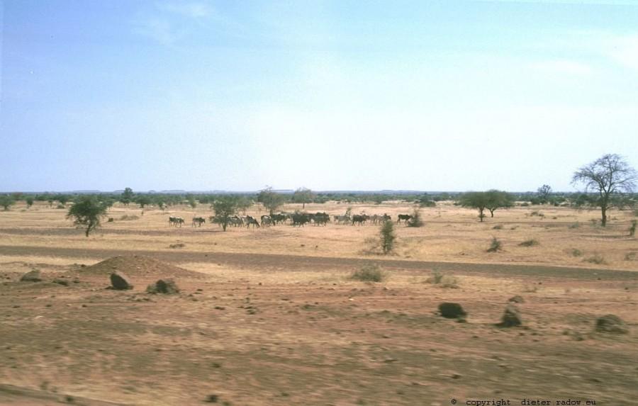 185 Burkina Faso Landschaft