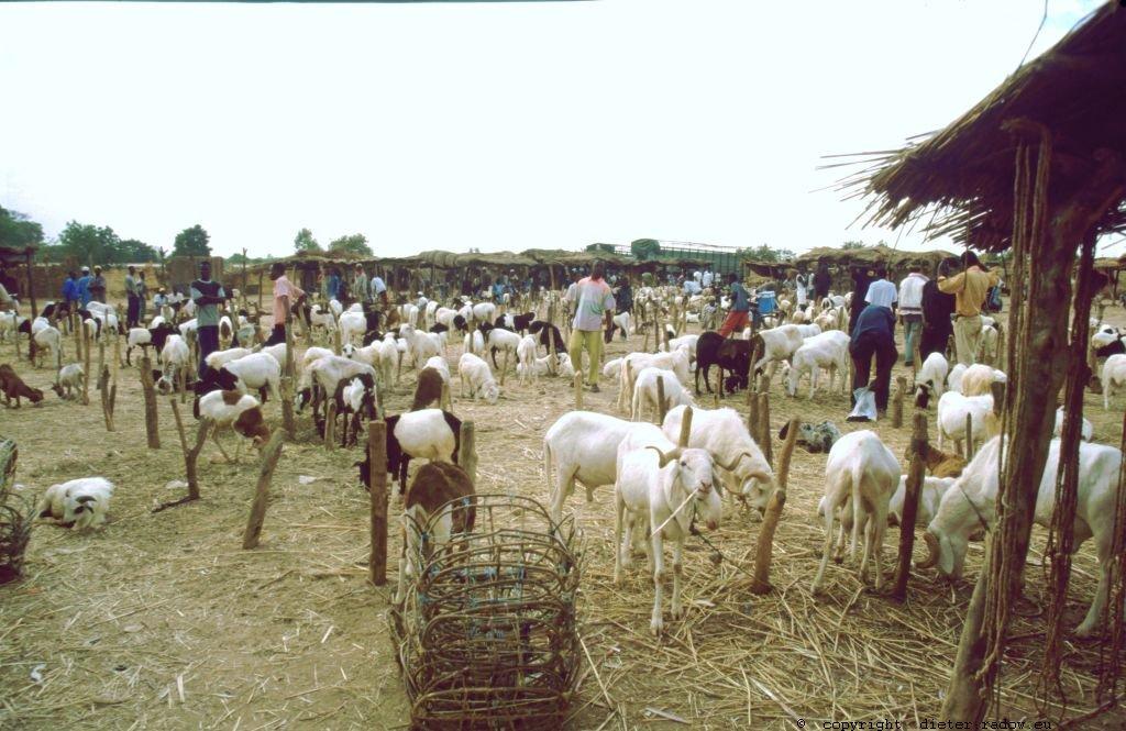 200 Burkina Faso Viehauftrieb