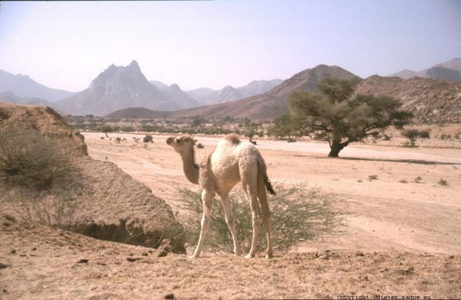 205Eritrea Wadi im nördlichen Hochland 3