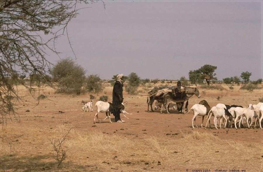 206 Burkina Faso Ziegen Gorom Gorom 52