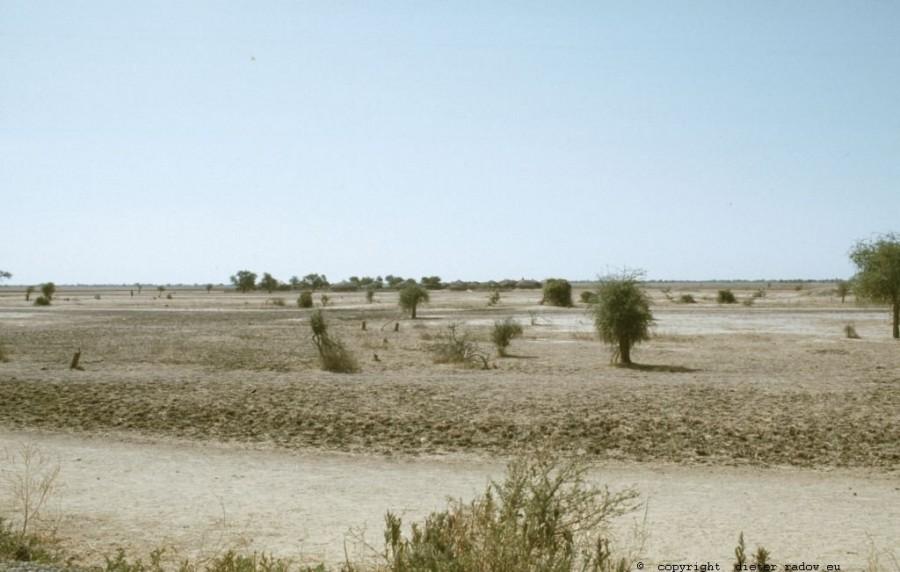 217 Kamerun - Logone-Birni-Überschwemmungs-Gebiet 6