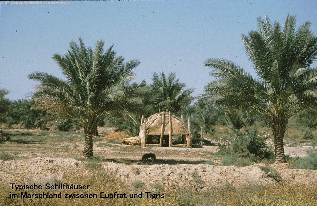 Irak 1995: Typische Schilfhäuser