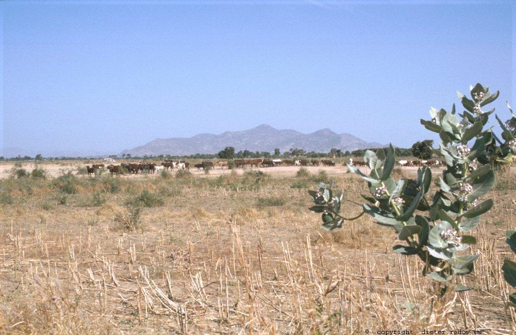 253 Kamerun Nord - Kapsiki-Gebiet