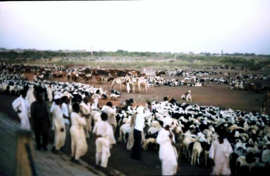301 Sudan Wad Medani 56