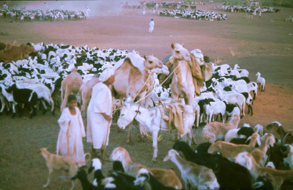 309Sudan Wad Medani 77