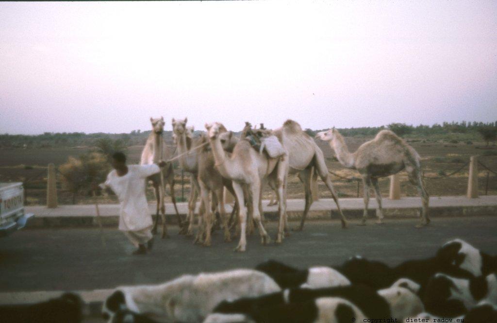 313Sudan Wad Medani Reichtum des Sahel