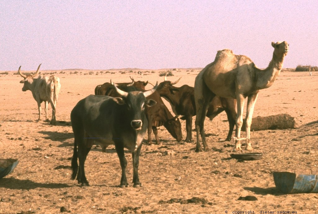 329Sudan Wad Medani z20 G