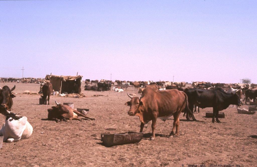333Sudan Wad Medani z65