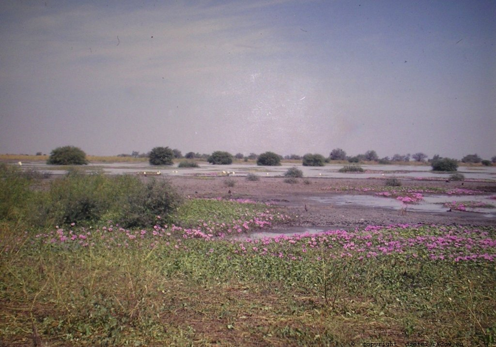 349Tschad Reserve de Faune de Bas Chari 10