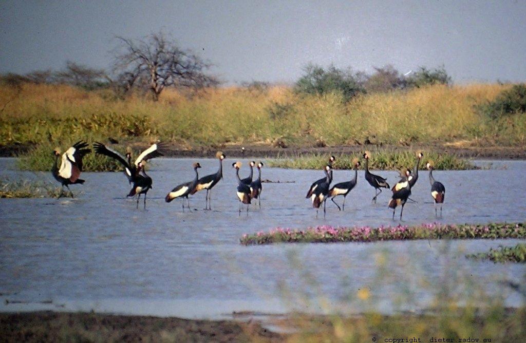 353Tschad Reserve de Faune de Bas Chari 13