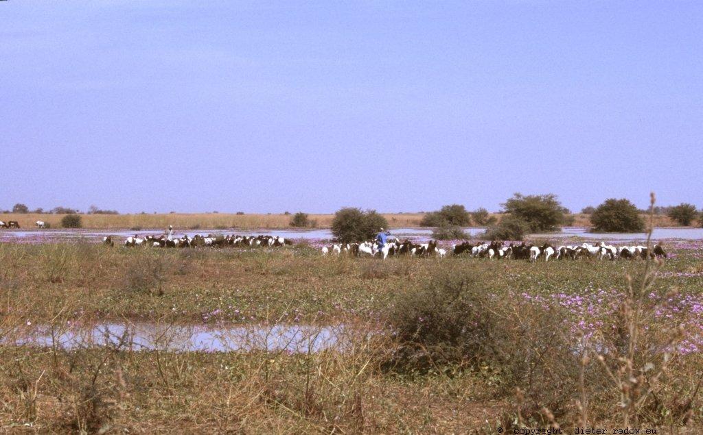 357Tschad Reserve de Faune de Bas Chari 5