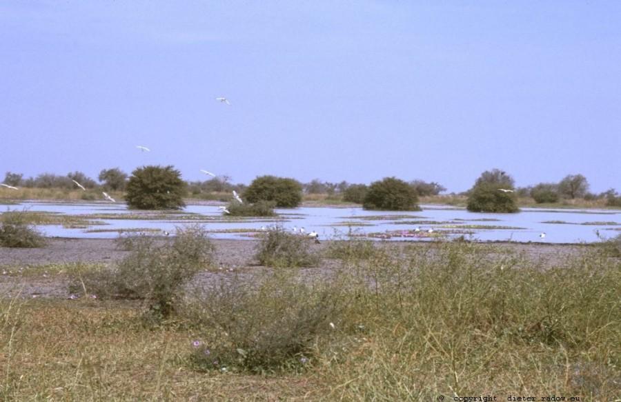 361Tschad Reserve de Faune de Bas Chari 9