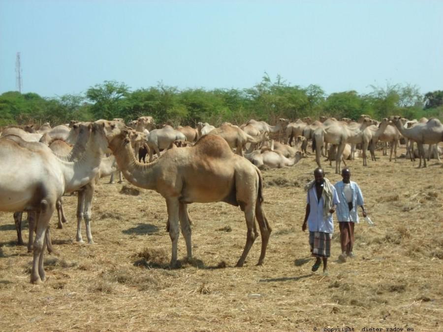 681 Djibouti 3