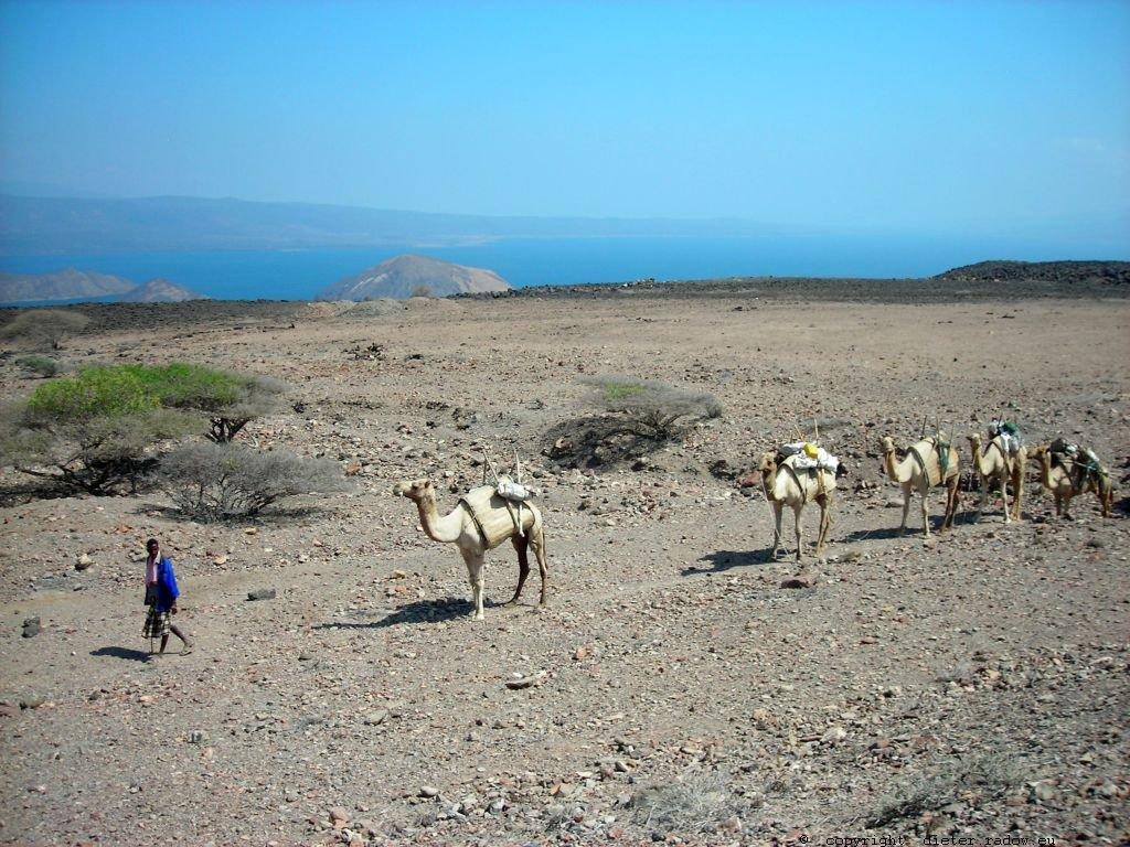 689 Djibouti 35