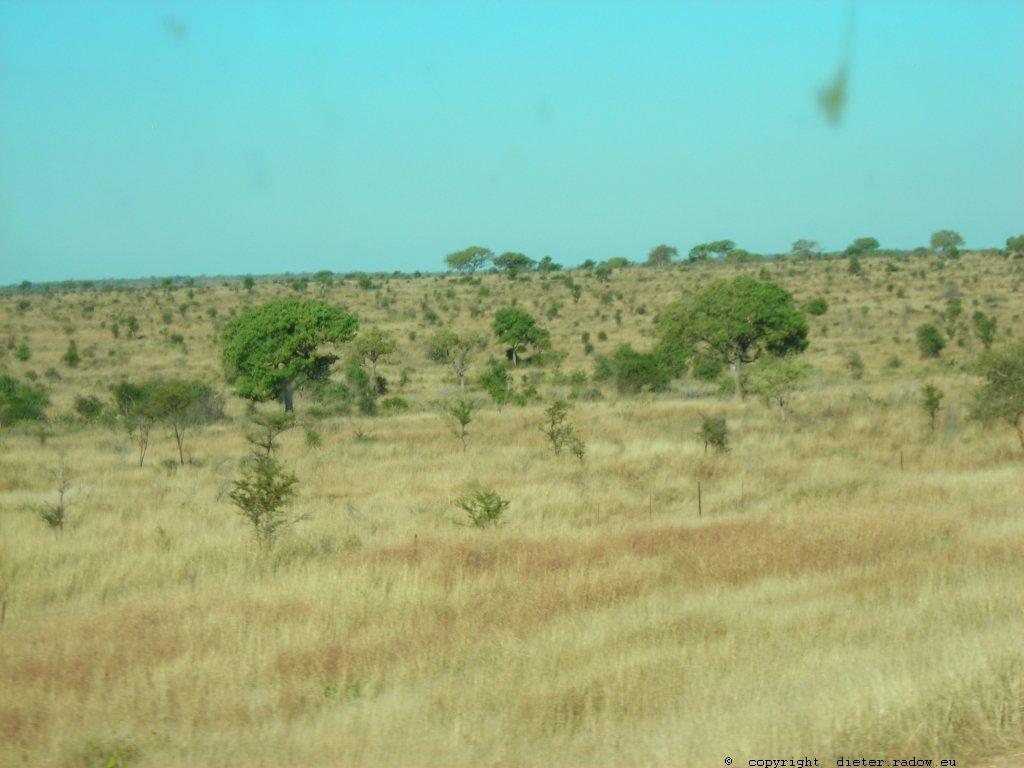 789 Mosambik Trockensavanne 11