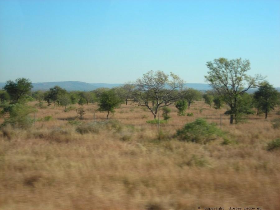 793 Mosambik Trockensavanne 8