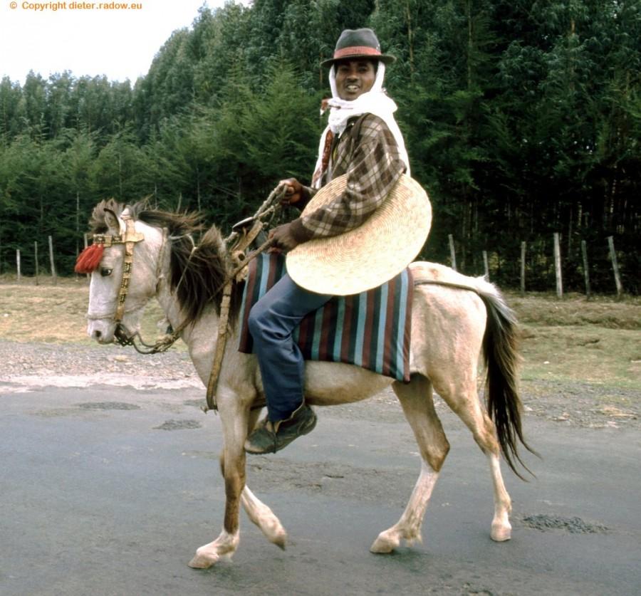 880 Pferd mit Trottel