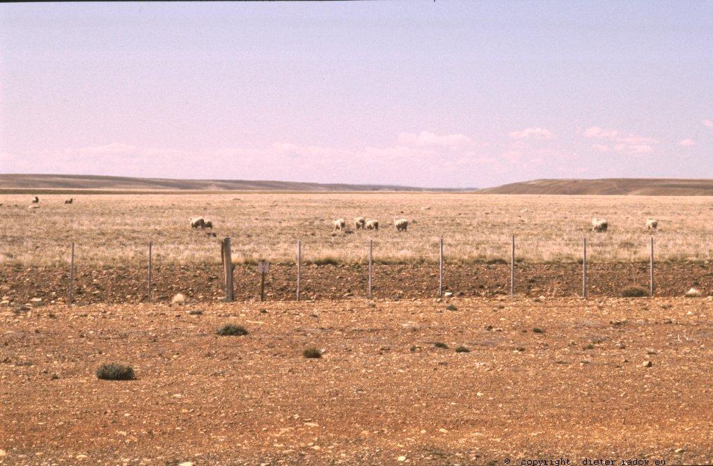 Patagonien Schafzucht 1993