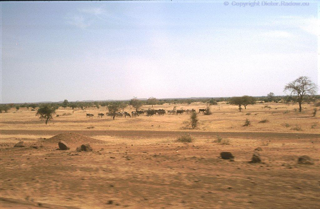 Sahel-Landschaft