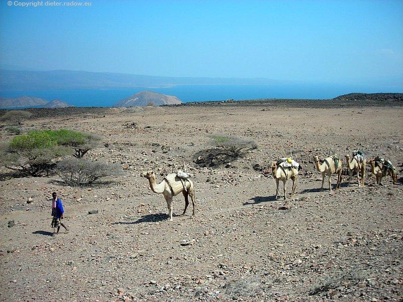 Djibouti Steinwüste Karawane