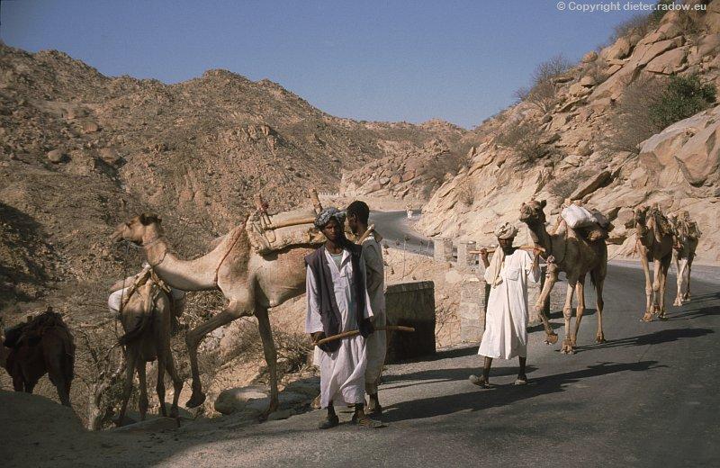 Eritrea Kameltransport in Gebirgswüste