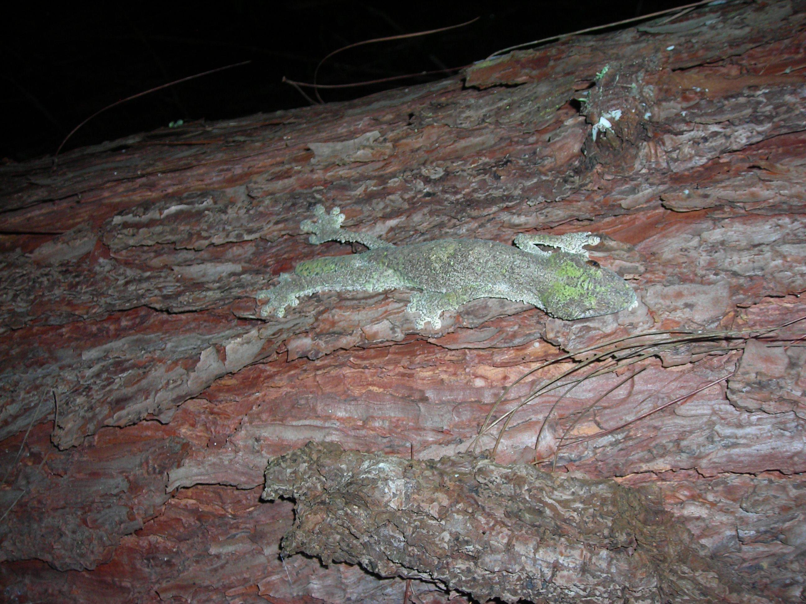 Gecko mit unpaarigen Beinen